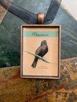 Blackbird: Poems