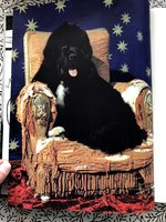 Gentle Giants: A Book of Newfoundlands (USED)
